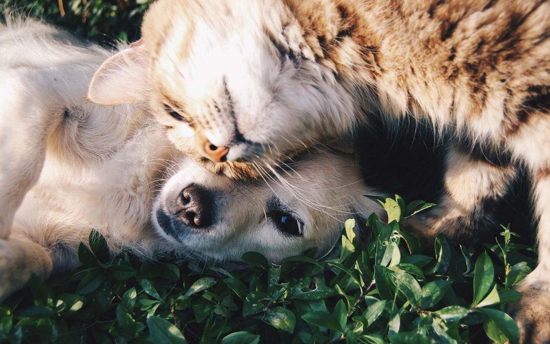 Câinii și pisicile, ajutor în terapiile complementare pentru bolnavii de cancer