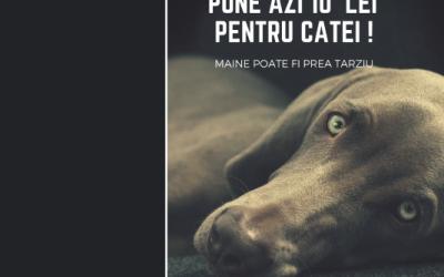 Avocatura pro bono: FIDASmart este alături de Homeless Animal Hospital în proiectul național de acordare de asistență medicală animalelor fără stăpân