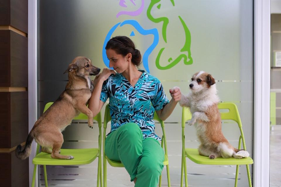Dr. Diana Manea, Diamond Vet: Avem şi în România un standard al tratamentelor veterinare