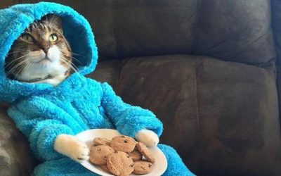 Pisicile care trăiesc în casă sunt mai puţin predispuse la infecţii transmisibile omului