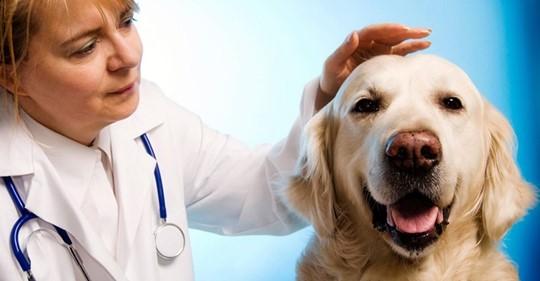 Cancerul, boala care afectează și animalele de companie