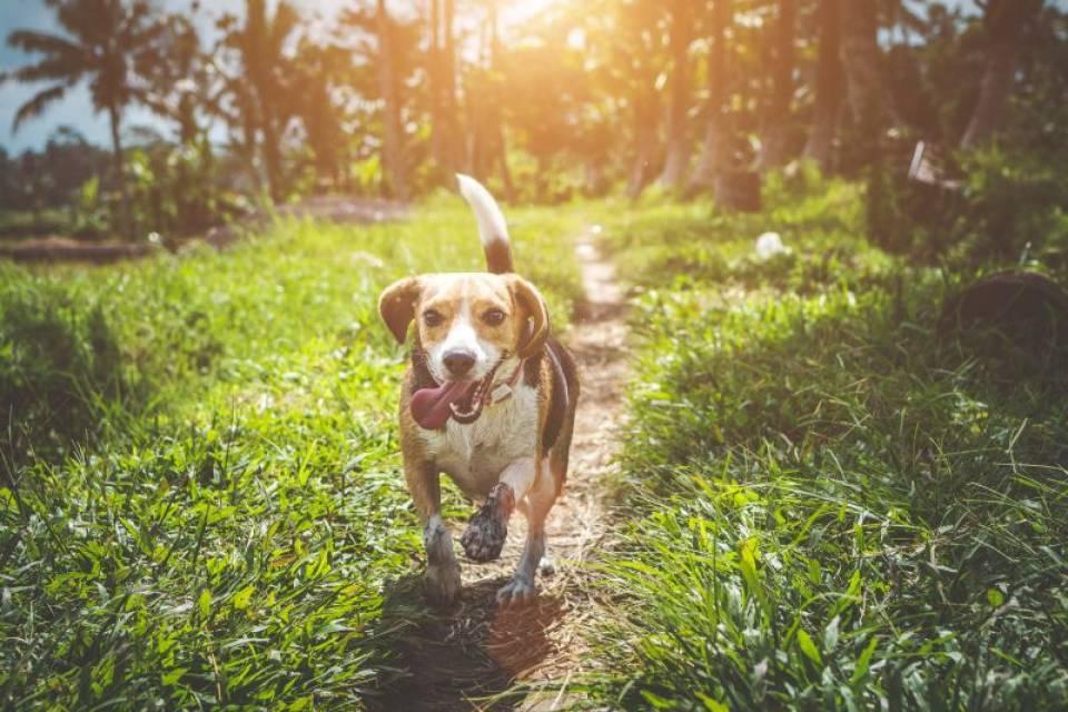 Creier, emoții: legătura total neașteptată dintre oameni și câini