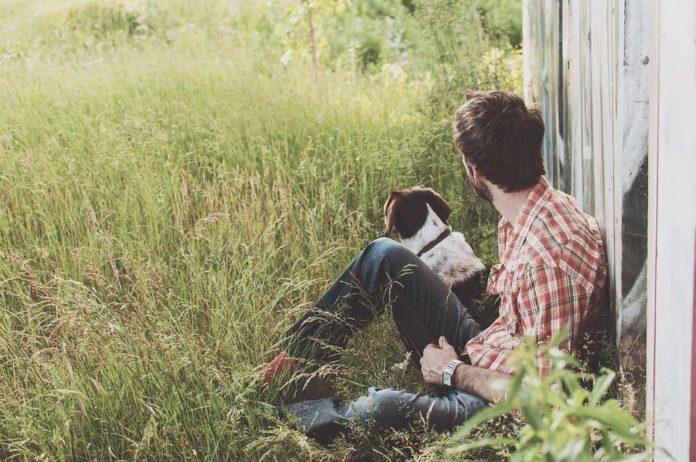 Ce obligații au deținătorii de câini
