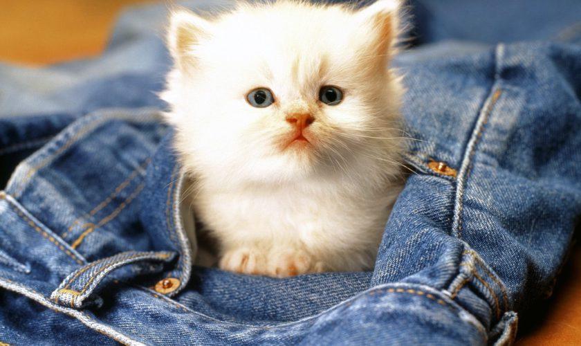 Beneficii incontestabile atunci când ai o pisică în casă. Torsul ei îți poate salva viața
