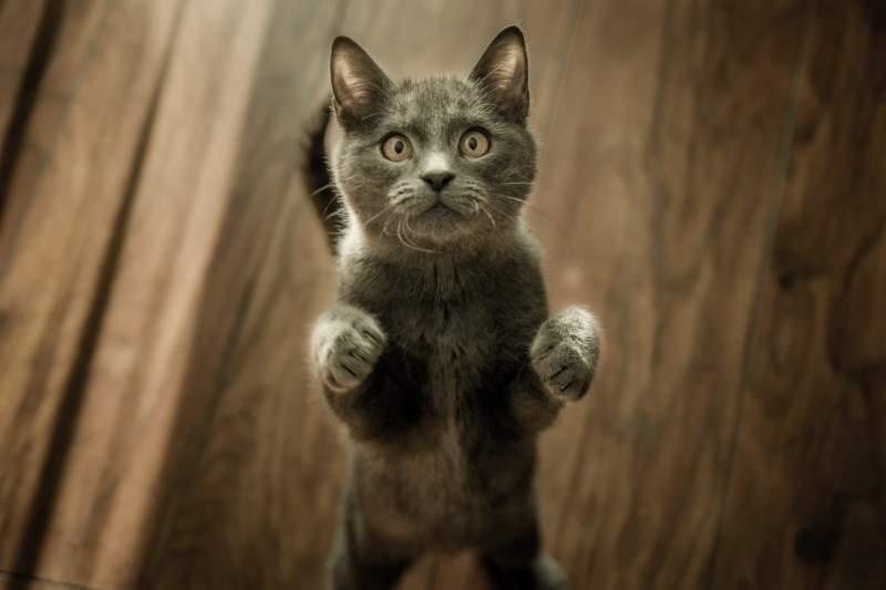 Cele mai populare 7 mituri despre pisici. Pe primul aproape toată lumea îl crede