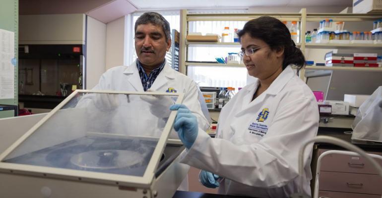 Nou instrument ce utilizează celule respiratorii porcine pentru a studia virusurile gripale