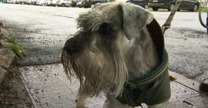 Norvegia – Câinii de companie, afectaţi de o boală misterioasă, în unele cazuri letală
