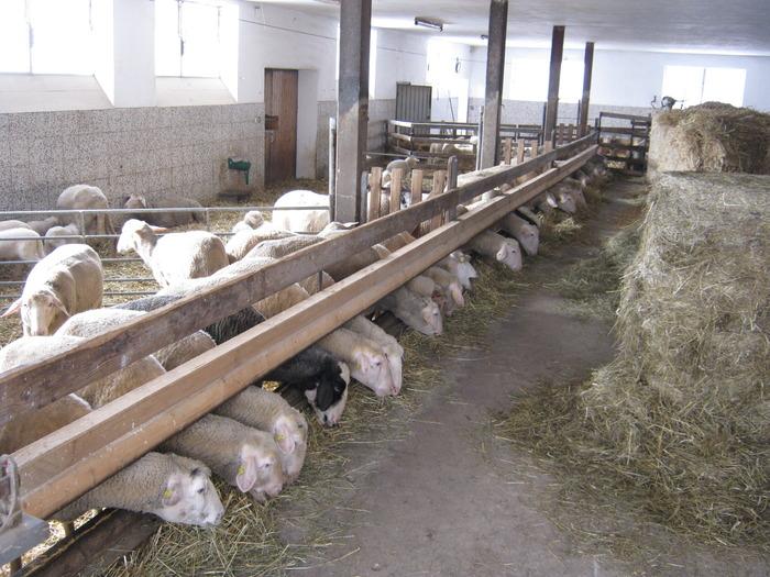 Comunicat de presă – Colegiul Medicilor Veterinari Filiala Sibiu