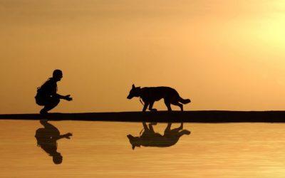 Studiu: Deținerea unui câine ca animal de companie este asociată cu un risc mai scăzut de boli cardiovasculare