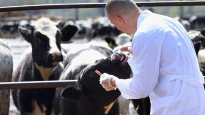 Buget de 10.000 lei / lună de la ANSVSA pentru medicii veterinari