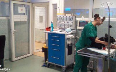 Sesiune de donare de sânge la Serviciul de urgențe veterinare de la USAMV București