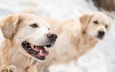 Prieteni pe viaţă. Poveştile uluitoare a cinci animale de companie care şi-au salvat stăpânii  Citeste mai mult: adev.ro/q1v8p9